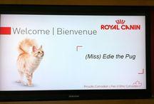 #FineFoodFriends @RoyalCaninCA / A love affair with my #FineFoodFriends at Royal Canin Canada