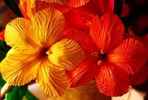 Flores y Más....