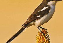 Ptáci a živočichové