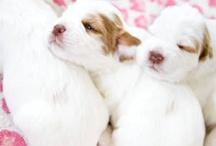 sweet baby animals