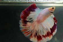 fishy / Peces y acuarios