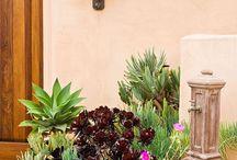 Succulents and sedum / Plants