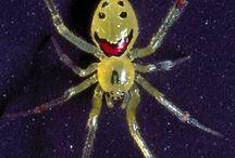 arachnids / by Kathy Woody