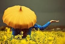 De gele paraplu