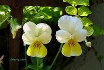 Flowers / by Jessica Wilson