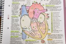 Estudios medicina