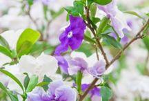 Green and Purple Garden