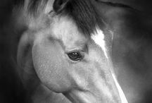 All Things Equestrian / HORSES!