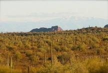 Sonoran Desert / The beautiful Sonoran Desert of Arizona.  These shots were specifically taken around the Queen Creek area.   / by Matt Siltala