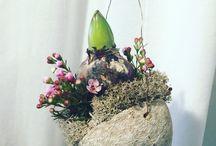 Flora / Hiacynty
