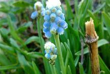 Flowering Finnish Garden