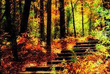 SEASONS: Fall