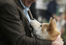 "my favorite movie ""HACHI"" / devotion and undying love of animal to his human / by Josefina R."