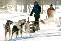 Husky Safaris / Pictures of cute huskies in Finnish Lapland, pulling their sledges and having fun on the snow
