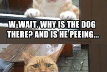 Tierischer Humor