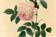 roza pattern