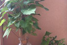 Kerteszkedes - Gardening / Gardening tricks