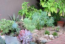 Corner Gardens / Corner gardens.