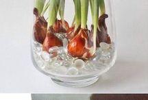 container plant ideas