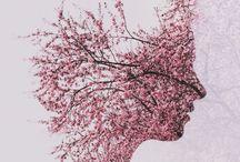 Cherry Blossom Shoot