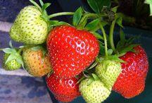 """Owoce - idealne dodatki do jogurtów mrożonych / Rozpoczynamy nowy cykl postów: """"Zdrowie w owocach"""". Z każdego postu dowiecie się, dlaczego warto zamienić słodycze na pyszne owoce."""