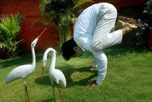 Yoga Delampady / Please like https://www.facebook.com/DelampadyGopalakrishna it gives information about yoga
