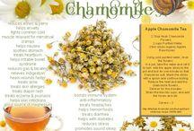 Herbs & oils & wonders / Herbs, herbal oils, infusions, salves and balms / by Eva Yo