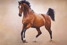 Horses / horses with movement. running etc