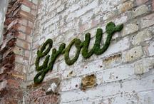 grow / by Cory Janiak