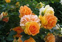 Vakre blomster / Blomster jeg syns er vakre