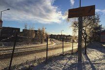 Oslo/Norway / Natur/ flowers / norway