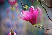 imagini frumoase ,flori.