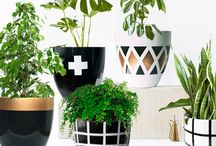 O U T D O O R / Refreshing and invigorating ideas for bringing the outdoors in and fill your interior space with beautiful plant-scape.