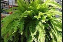 szobai növények
