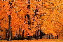 Analiza kolorystyczna: Ciepła Jesień (Warm Autumn) / http://arsenicmakeup.blogspot.com/search/label/analiza%20kolorystyczna