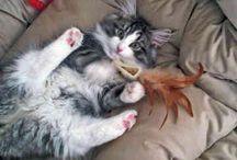 Favourite kitties