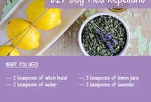 100% Natural Remedies for Dogs
