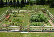 Garden - Vegetable Garden