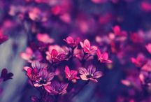 flora. flowers.