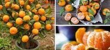 frutas em vasos