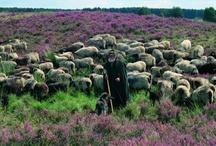 Nationaal Park Maasduinen | DeFruitschuur.com