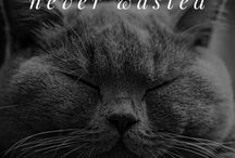 Cat Inspirational Quotes / Truths and wisdoms about cats.