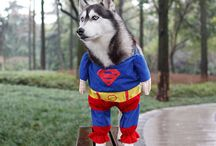 Halloween For Pets / Please don't forget your pets. Here are some creative ideas for your pets Halloween costumes