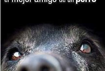 mensajes de animales