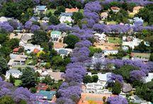 Johannesburg/Pretoria