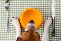 Dog food / Dogfood