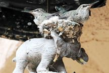 Bird Nests / Touching and amazing images of bird nests. You would be amazed at the strange places birds build their nests!