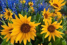 Flowerfuls / by Trish