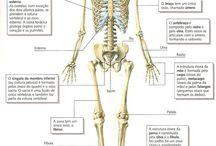 Anatomia ossos