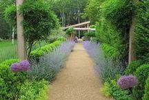 Garden / by Jerilyne